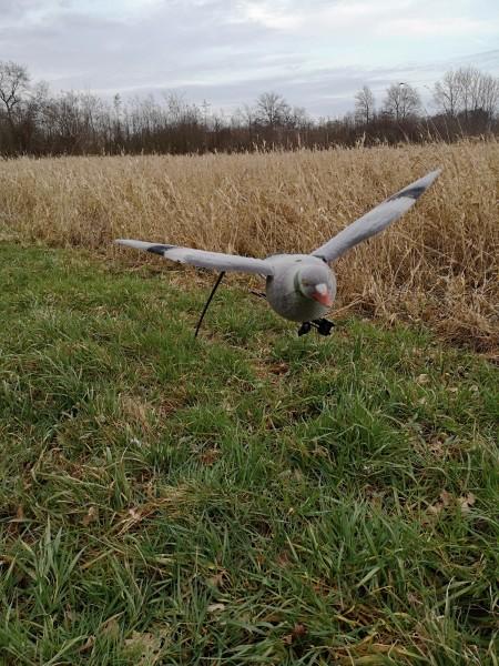 Clever Hunting fliegende Locktaube Vollkörper beflockt
