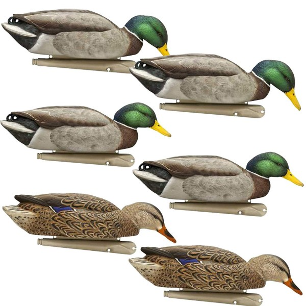 Lockente Stockente Top Flight Back Water Mallards by OVIS.de