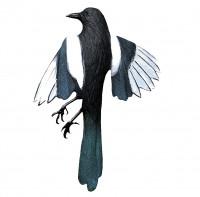 Sport Plast Lockelster Dead Magpie Decoy