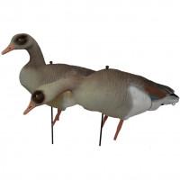 Prodecoys Nilgans Lockgänse Set Egyptian Goose