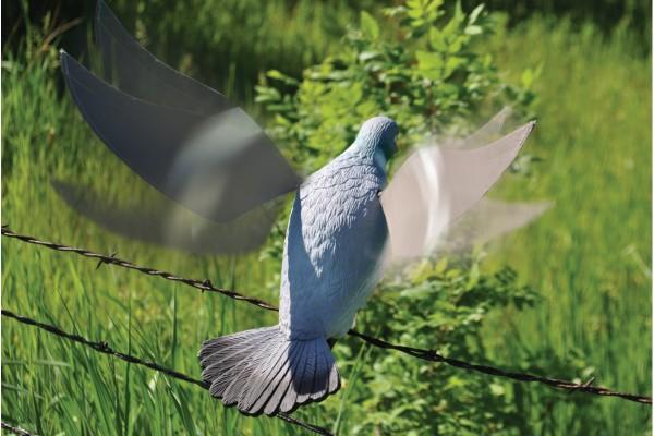 Flattertaube Edge by Expedite mit motorisierten Flügeln