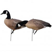 Prodecoys Lockgänse Set Canada Goose Vollkörper